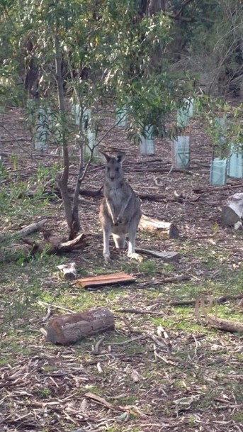 P.S I saw my first kangaroo!